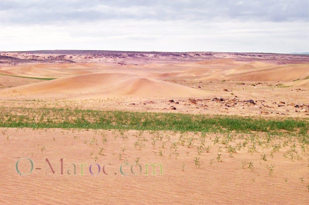 Des végétaux poussent dans les dunes après la pluie