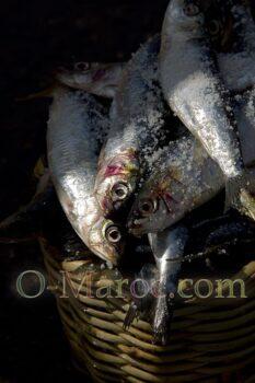 Des sardines dans un panier de pêcheur