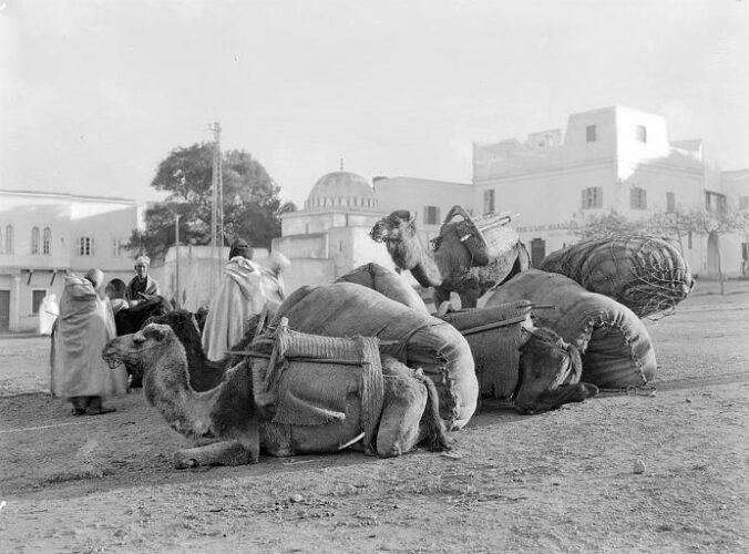 Chameaux rabat 1925