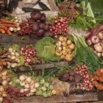 Légumes en Doukkala