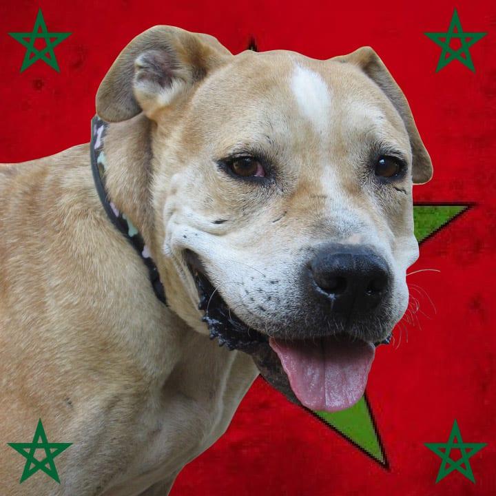voyage maroc chien