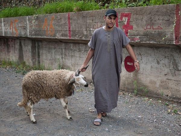 Homme tirant un mouton par la corne à Casablanca
